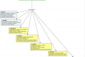 Scienze:La classificazione dei viventi/categorie sistematiche/Concetto di specie/ il nome scientifico